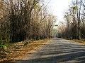 Bandipur Tiger Reserve - panoramio (12).jpg