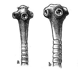 Ascaris és Giardia tünetek felnőtteknél peroxid a Trichomonas ból