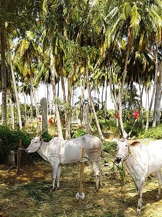Bannur - Image: Bannur coconut farm