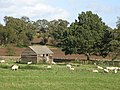 Barn and sheep grazing, Chesters Fort - geograph.org.uk - 1057798.jpg