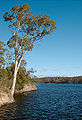 Barossa reservoir view - portrait.jpg