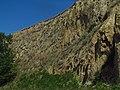 Bassia scoparia IMG 5774.jpg