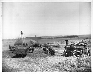 Daniel Freeman (Los Angeles County) - Threshing on the Freeman property about 1900