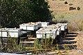 Beehive near Kiryat Shmona.JPG