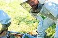 Bees! (1039780292).jpg