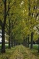 Belgium harmonie (22136350153).jpg