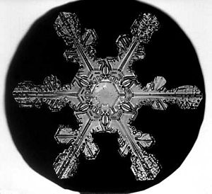 "A picture of a Snow Crystal taken by Wilson Bentley, ""The Snowflake Man."" (Photo credit: Wikipedia)"