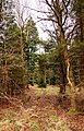 Bernwood Forest - geograph.org.uk - 1741462.jpg