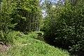 Bewaldeter Verlauf der Möhlin.jpg