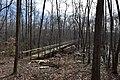 Big Hill Pond State Park Trail 7.jpg