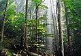 Thumbnail for version as of 06:34, 6 September 2009