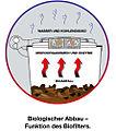 Biologischer Abbau-Funktion des Biofilters.jpg