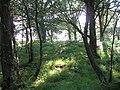 Birch woods, Killiechonate - geograph.org.uk - 1429144.jpg
