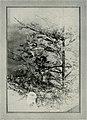 Bird-lore (1916) (14755071672).jpg