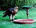 Birds15Slovakia9.JPG