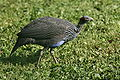 Birds18092009c.jpg