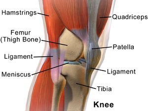 "Lateral meniscus - Knee from the side, with lateral meniscus simply labeled as ""meniscus""."