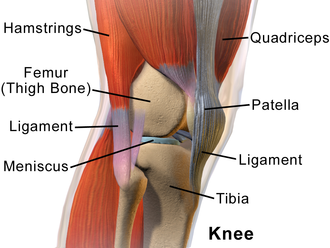 """Lateral meniscus - Knee from the side, with lateral meniscus simply labeled as """"meniscus""""."""