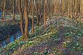 Bledule jarní v PR Králova zahrada 59.jpg
