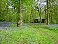Bluebells - geograph.org.uk - 6535.jpg