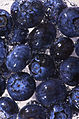 Blueberry Sparkle (4334489516).jpg
