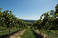 Bluemont Winery fields.jpg