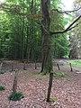 Bois des Capucins (Tervuren).jpg