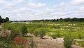Bords de Loire à Vineuil (Loir et Cher).jpg