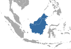 Bornean Shrew area.png