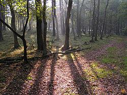 Afbeeldingsresultaat voor een bos
