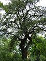 BotanicGardensPisa (32).JPG
