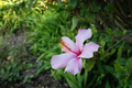 Botanic beauty.png