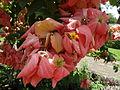 Botanical Garden of Peradeniya 40.JPG