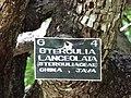 Botanical Garden of Peradeniya 73.JPG