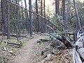 Boynton Canyon Trail, Sedona, Arizona - panoramio (45).jpg
