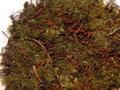 Brachythecium velutinum3 resize.jpg