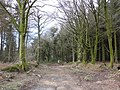 Bridleway, through Downlands Plantation - geograph.org.uk - 1776033.jpg