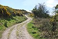 Bridleway leading to Ballard Down - geograph.org.uk - 767228.jpg
