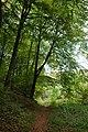 Bridleway through Barn Wood, near Whiteway - geograph.org.uk - 585726.jpg
