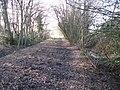 Bridleway through Mercer Wood - geograph.org.uk - 1702497.jpg
