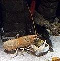 Bristol Aquarium 6.jpg