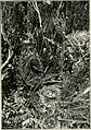 British birds' nests; how, where, and when to find and identify them (1898) (14769482993).jpg