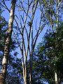 Bromélia no alto de árvore.jpg