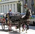 Brugge (Bruges) horses 2.jpg