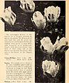 Bulbs and seeds for fall planting 1933 (1933) (20231999390).jpg