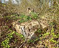 Bunker am Sattelwald 2.jpg