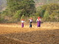 Burmese women working on the fildes.jpg
