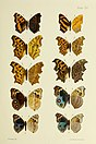 Butterflies from China, Japan, and Corea (1892) (19888109024).jpg