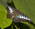 Butterfly 4 (4866602003).jpg