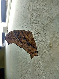 Butterfly hostel 02.jpg